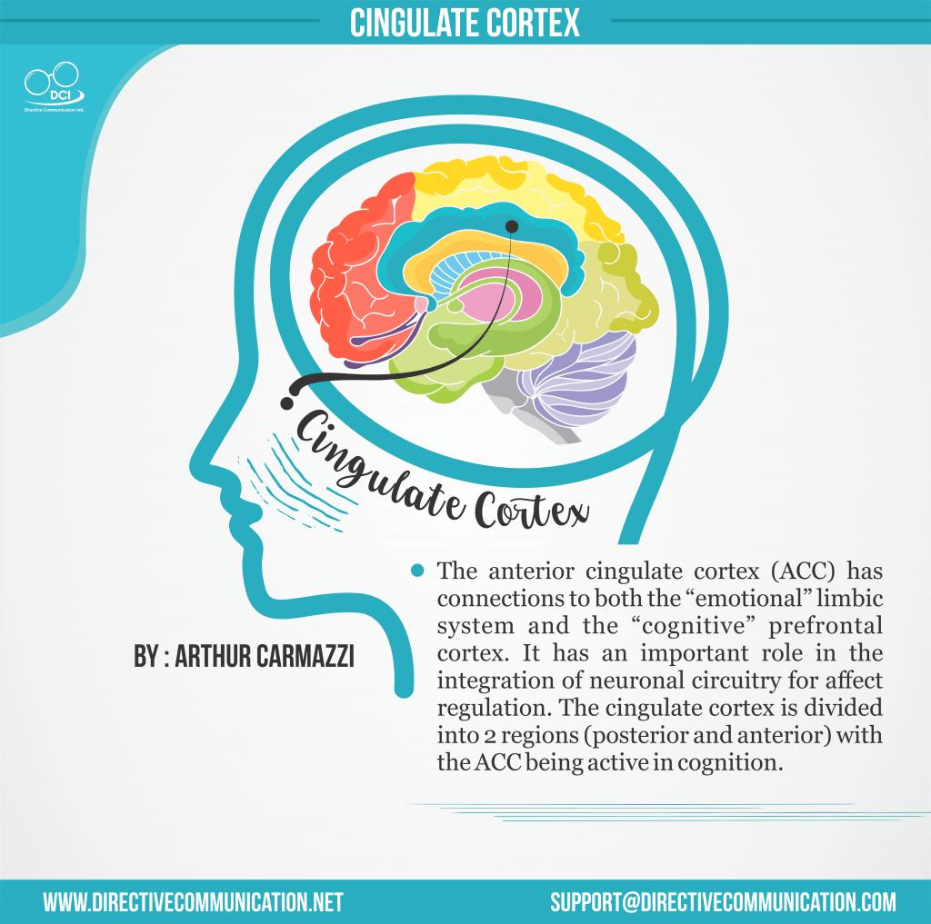 cingulate cortex Head Only